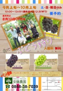 安藤農園_ぶどう狩り2016