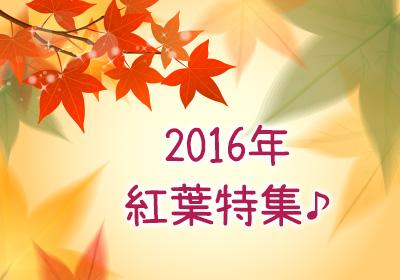 2016年 紅葉特集