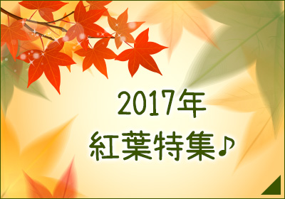 2017年 紅葉特集