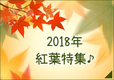 2018年 紅葉特集